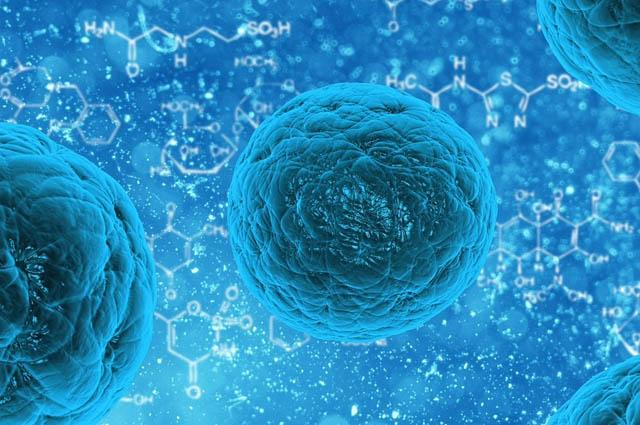 Las Células Somáticas